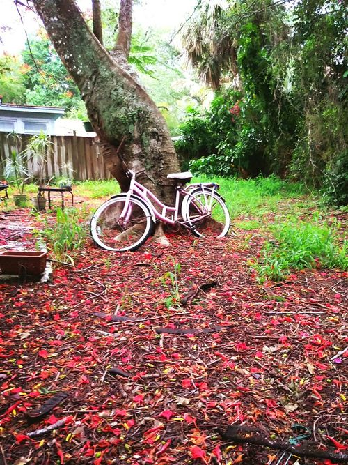 Bicycle Bicycle Outdoors Tree Beauty In Nature Rainy Season Beauty In Nature Summer After The Rain Stopped Flowers, Nature And Beauty Flowers Backyard Home