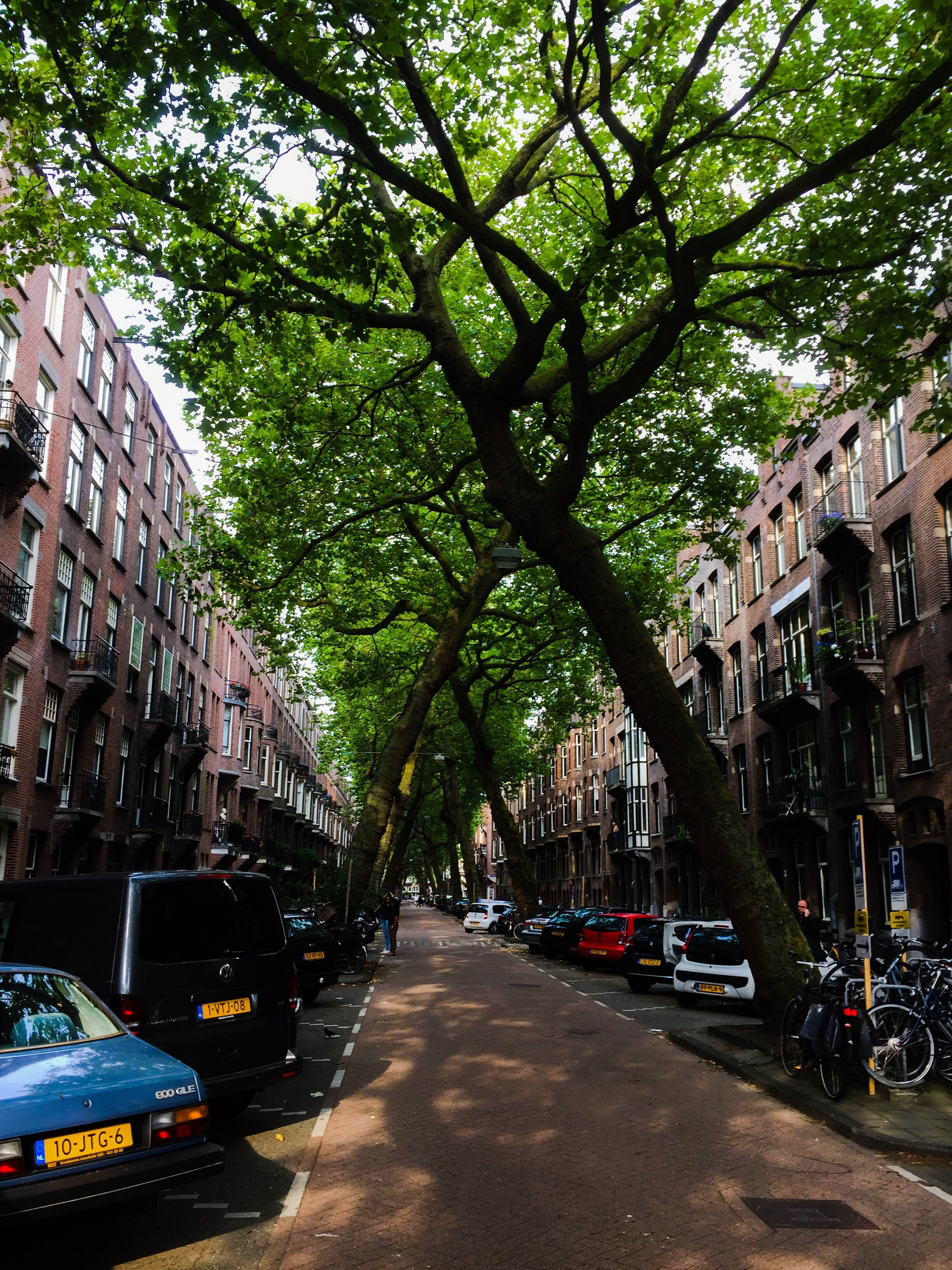 building exterior, transportation, car, built structure, architecture, mode of transport, land vehicle, city, tree, parking, street, stationary, city life, travel, road, roadside, residential structure, residential building, parked, in a row, tree trunk, city street, branch, residential district, travel destinations, vehicle, the way forward, outdoors, stationery, day, growth, in front of, rush hour