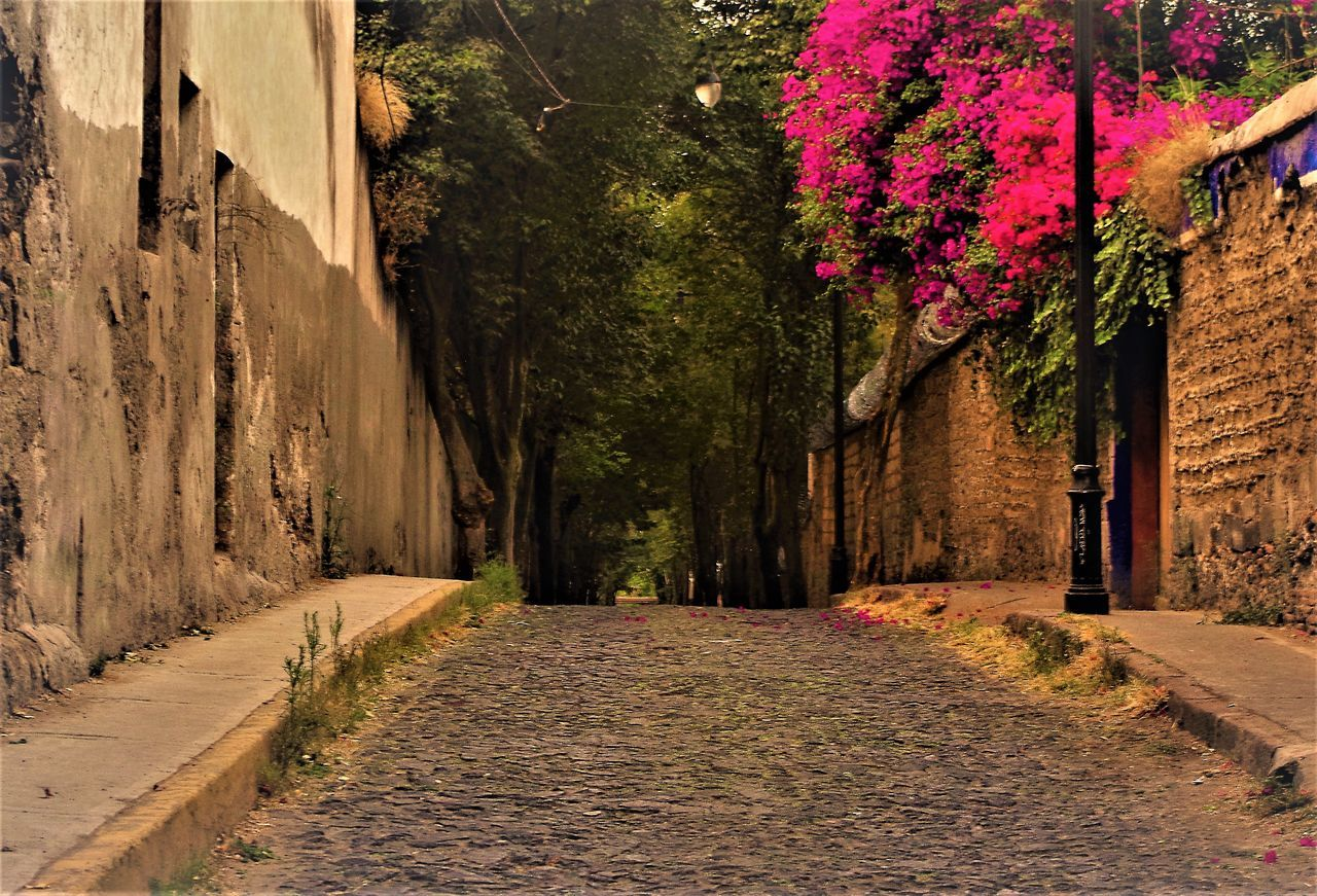 the way forward, tree, road, no people, built structure, nature, walkway, outdoors, architecture, beauty in nature, day, flower