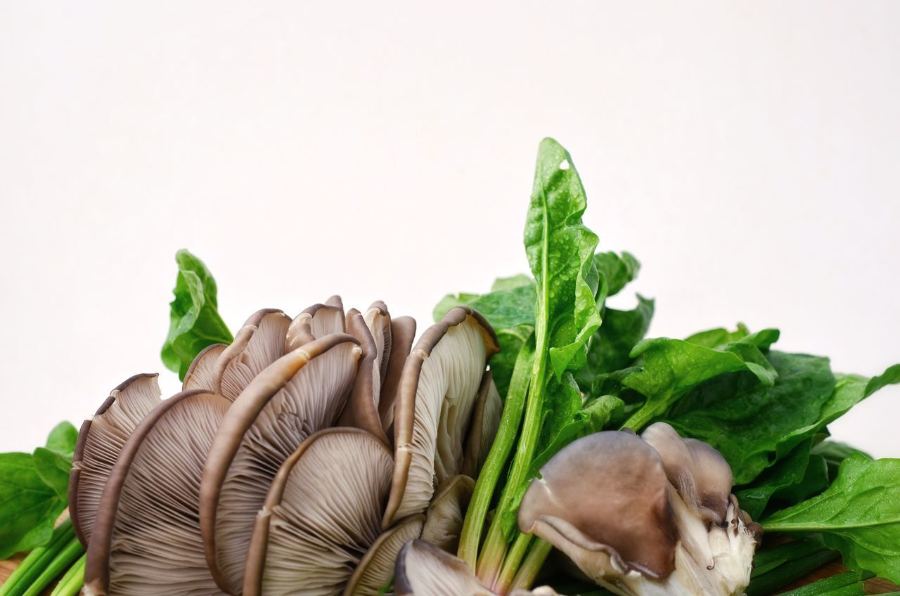 Mushrooms With Spinach Against White Background