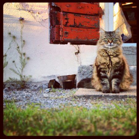 Cat Chat Sun Cat♡ Minou Miaou Bouledepoil