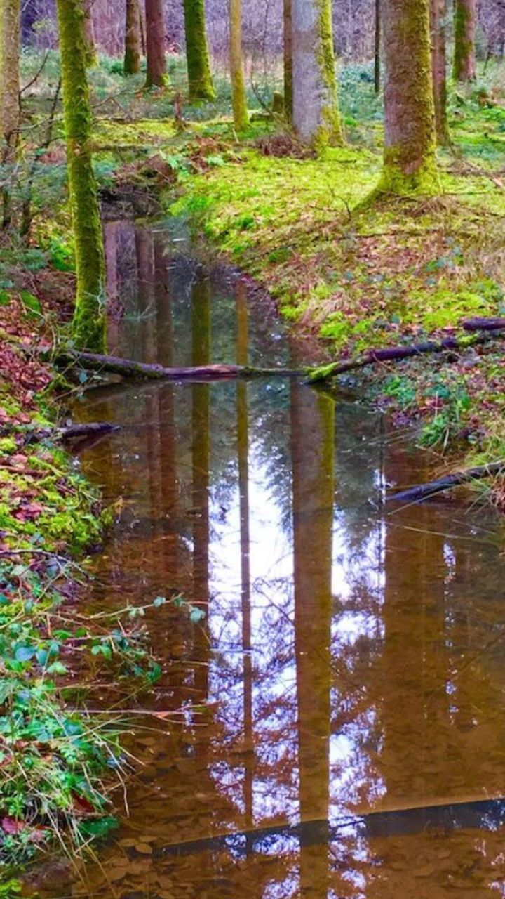 water, reflection, nature, no people, day, outdoors, forest, tranquility, growth, tree, tree trunk, scenics, beauty in nature, grass