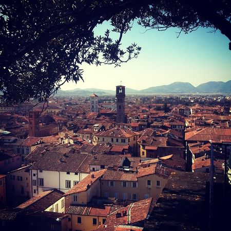 View of Lucca from the highest tower. And someone decided to plant trees on the rooftop of said tower.