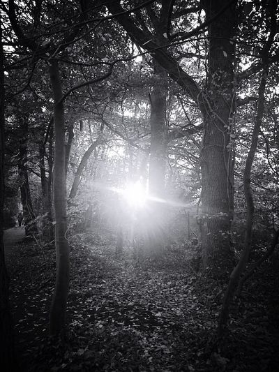 Spirituality Lightplay Into The Woods Nature Photography Blackandwhite Black And White Tree Light And Shadow