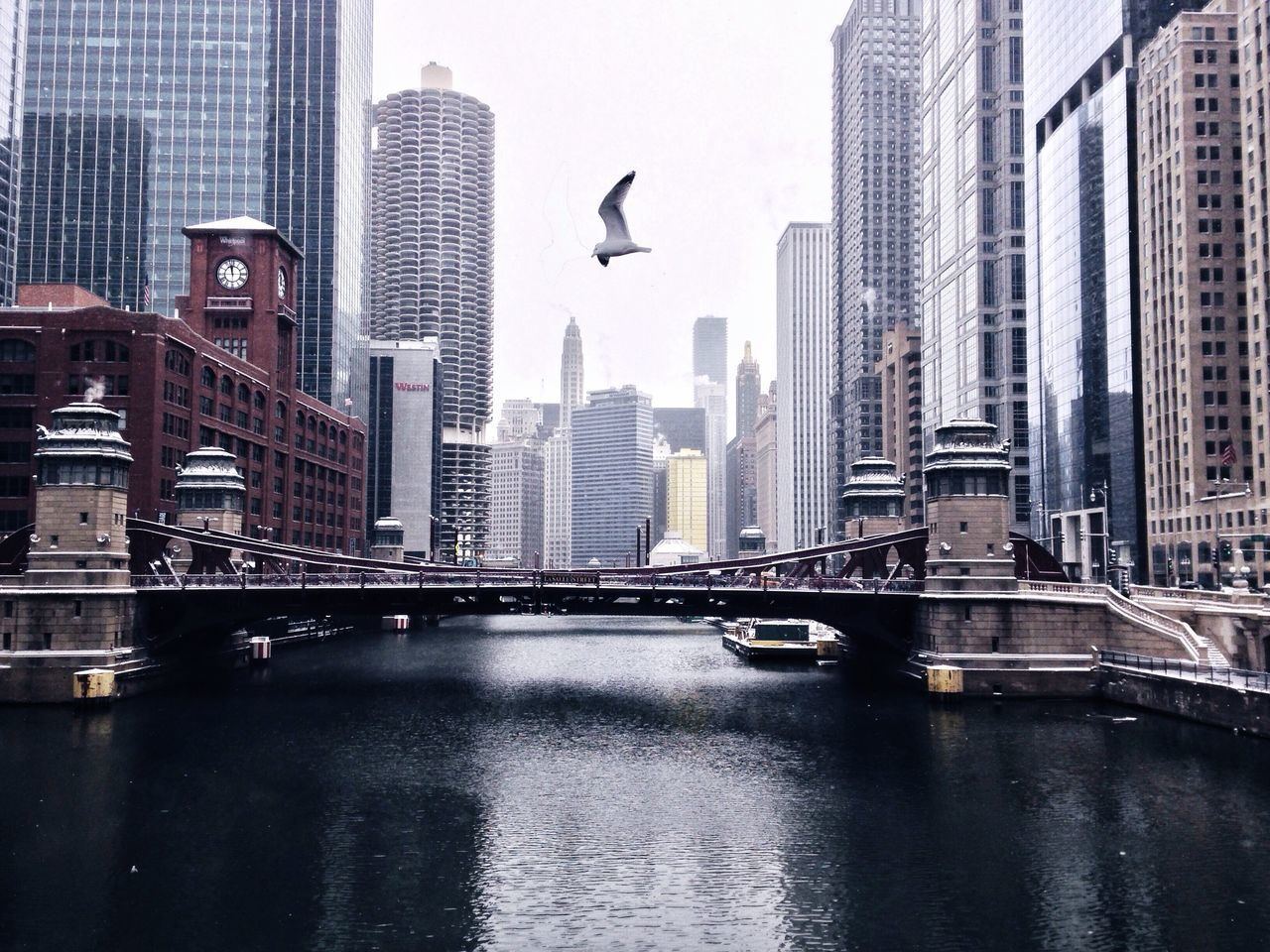 Winter Chicago Chicago River AMPt_community EyeEm Best Shots Architecture Great Views Wintertime