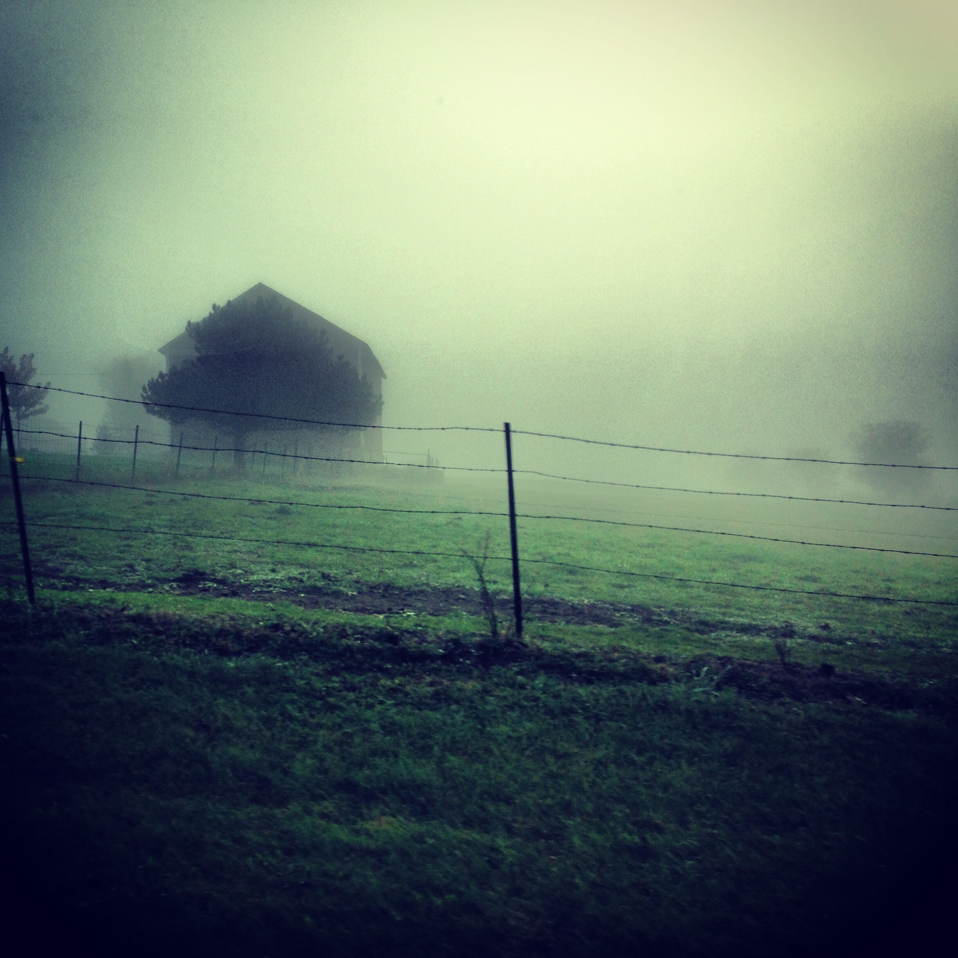 tranquility, tranquil scene, grass, landscape, scenics, nature, fence, fog, field, beauty in nature, sky, non-urban scene, protection, plant, foggy, copy space, outdoors, remote, grassy