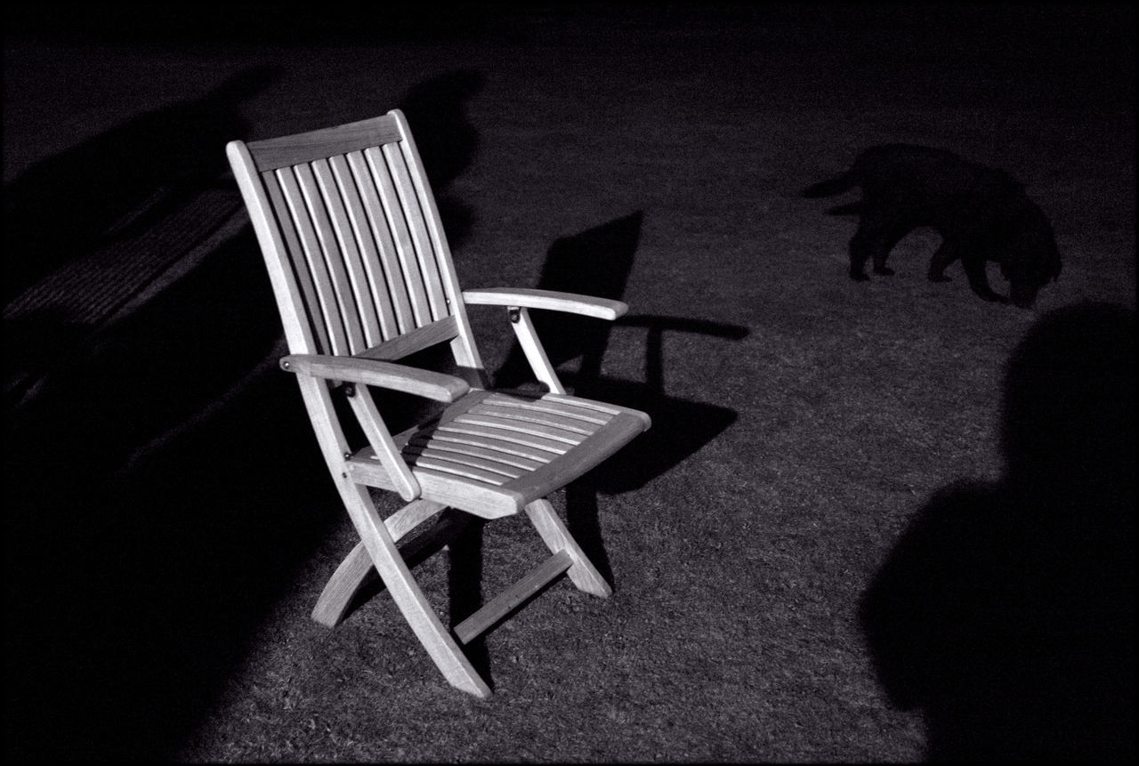 Wooden Chair And Dog On Field At Night