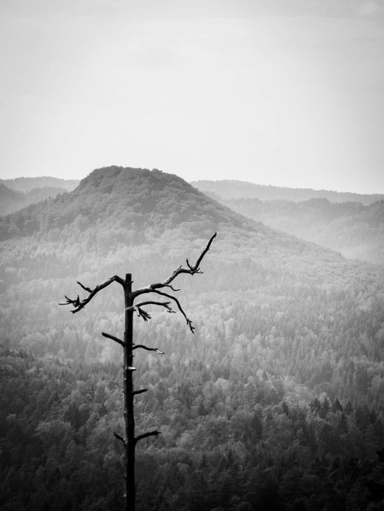 did this on a hiking tour with my family.... the contrast of black and white Beauty In Nature Dead Tree Fog Fogy Mountain Mountain Range Outdoors Silhouette