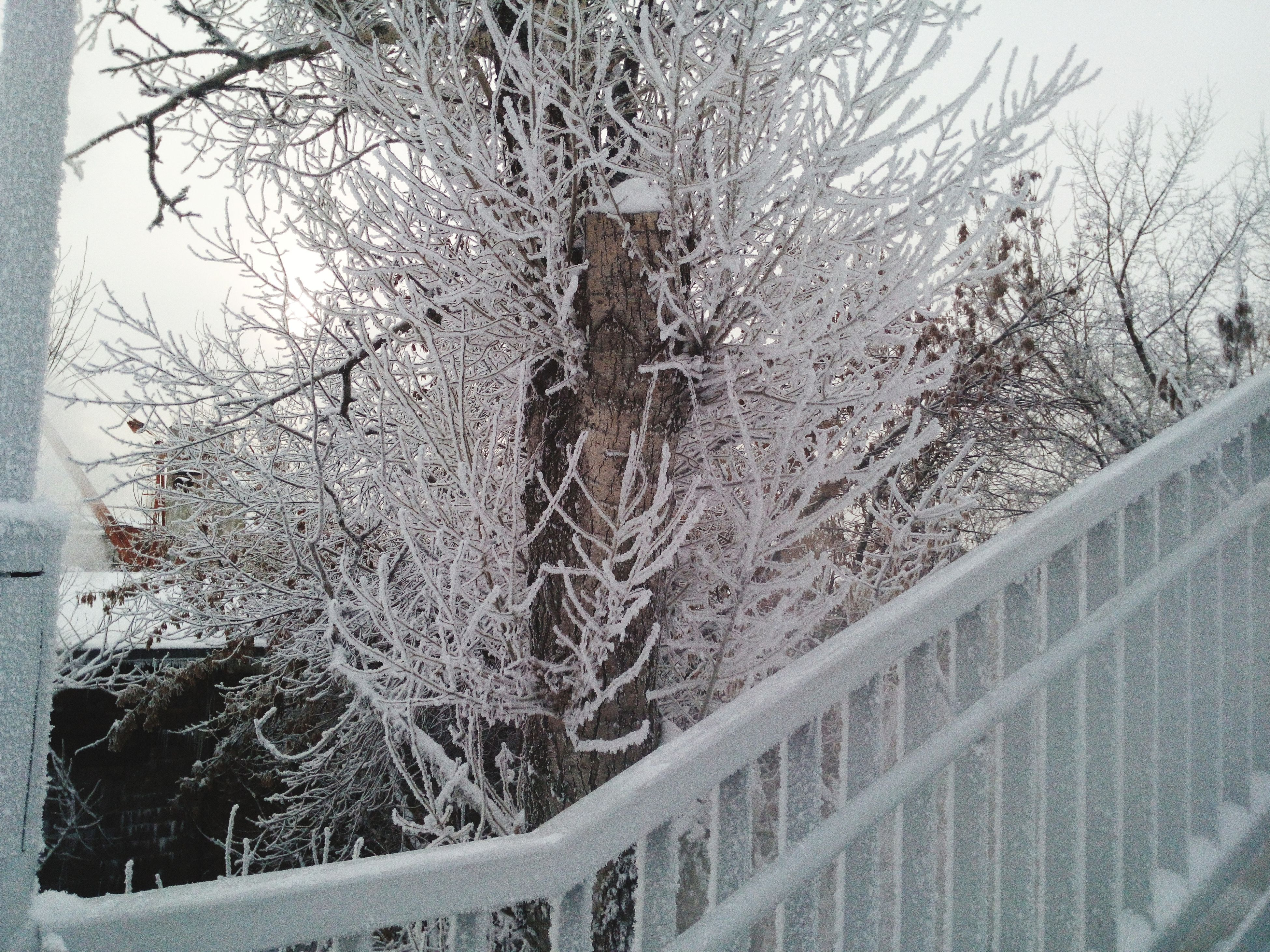 tree, bare tree, winter, branch, snow, cold temperature, nature, tree trunk, season, tranquility, day, growth, frozen, outdoors, weather, covering, beauty in nature, no people, built structure, railing