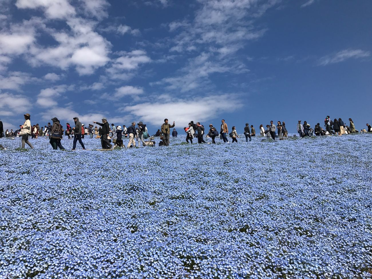 HitachiSeaSidePark Japan Large Group Of People Sky Cloud - Sky Men Real People Nature Crowd Day Outdoors Blue Women Beauty In Nature Lifestyles People