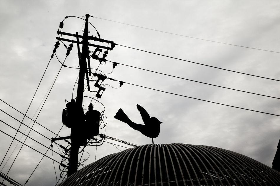 Naksan Park Haewhadong Seoul Korea Pigeon Sculpture Electricity Pole Black And White The Street Photographer - 2016 EyeEm Awards
