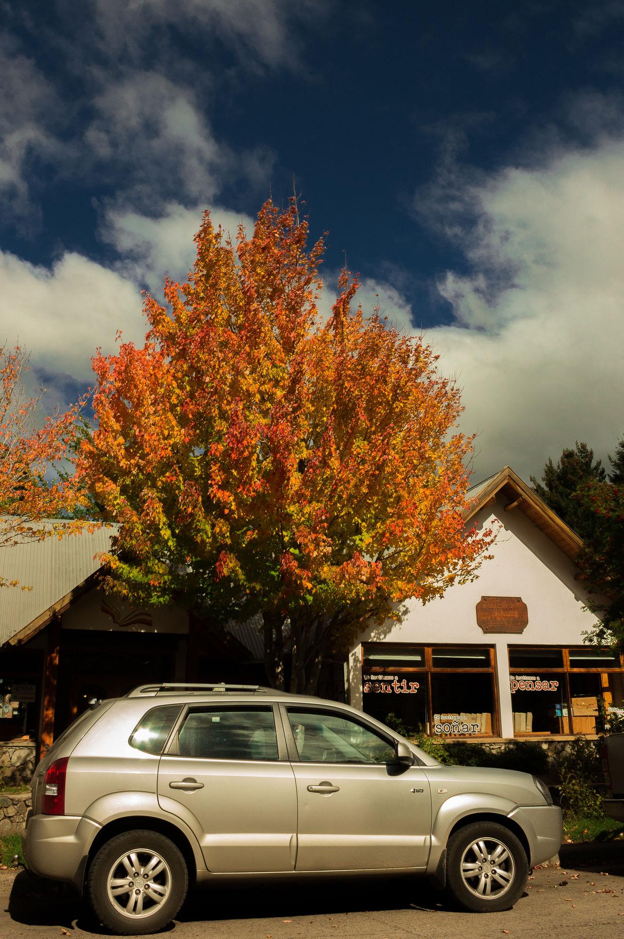 Auntumn Auntumn Colors Canonphotography Car City Cloud - Sky Day No People Oranje Oranje Color Otoño Outdoors Sky Transportation Tree Tree