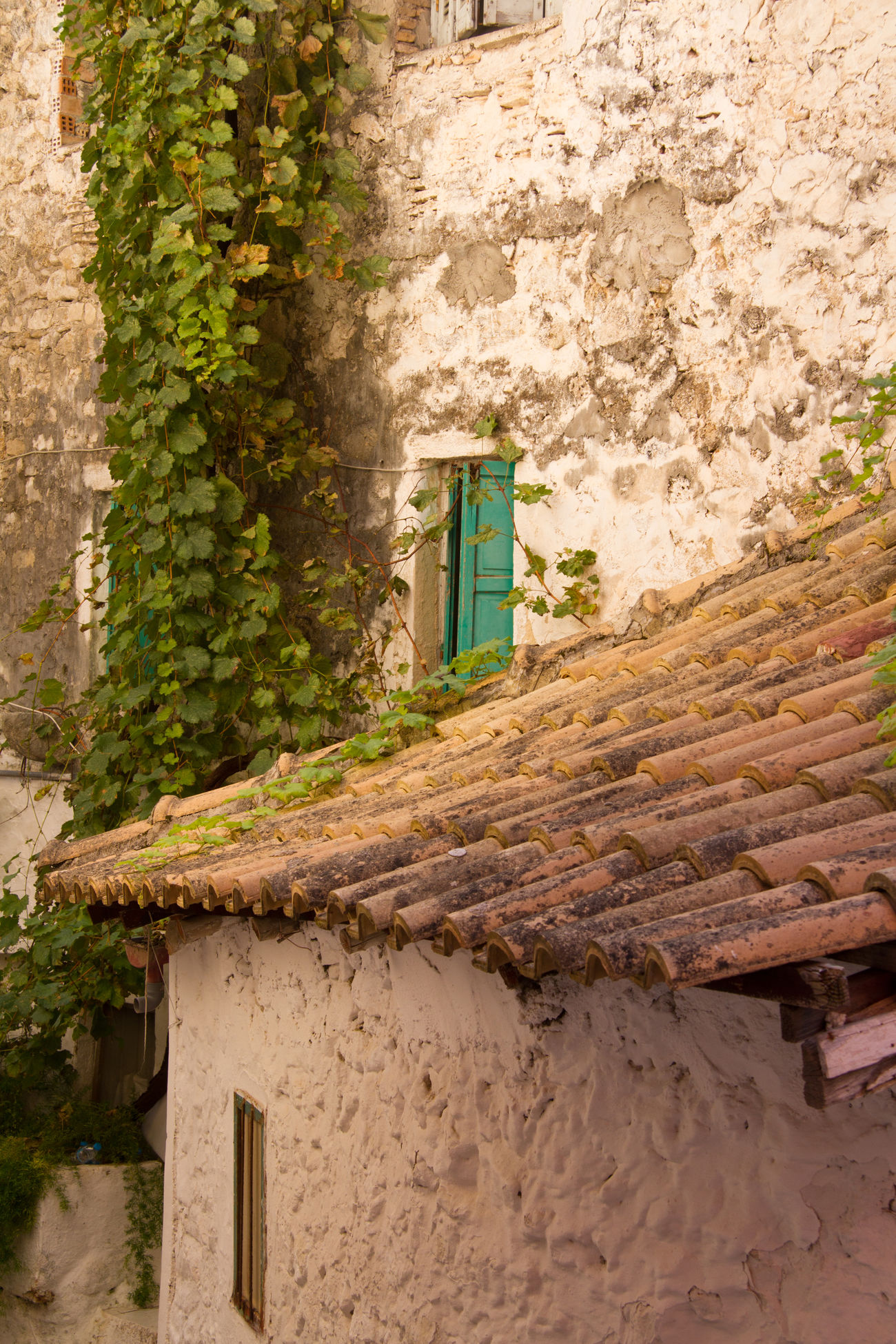 Architecture Derelict Greece Holiday House Ivy Portrait