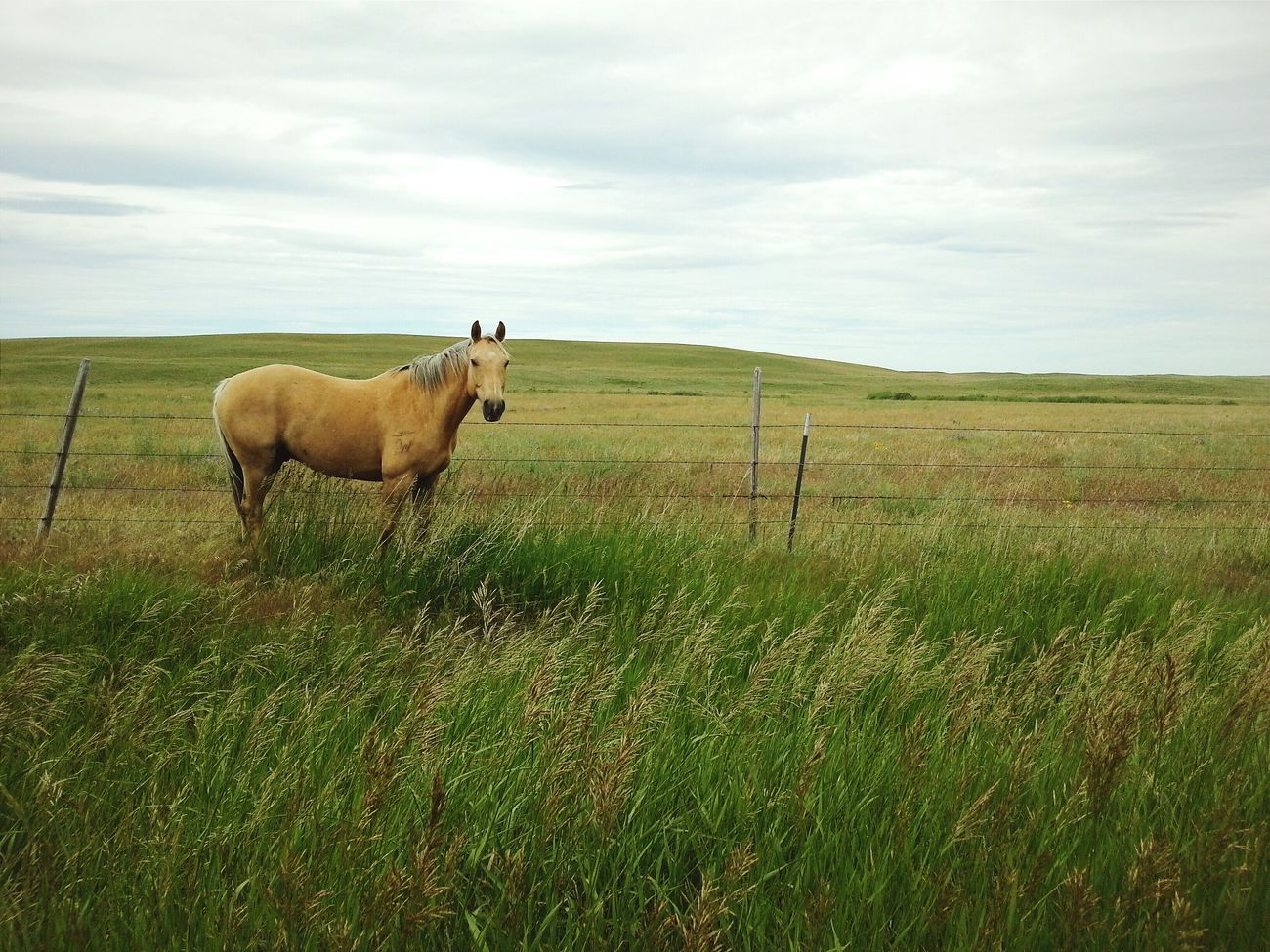 Beautiful stock photos of meadow, Animal Themes, Day, Domestic Animals, Fence