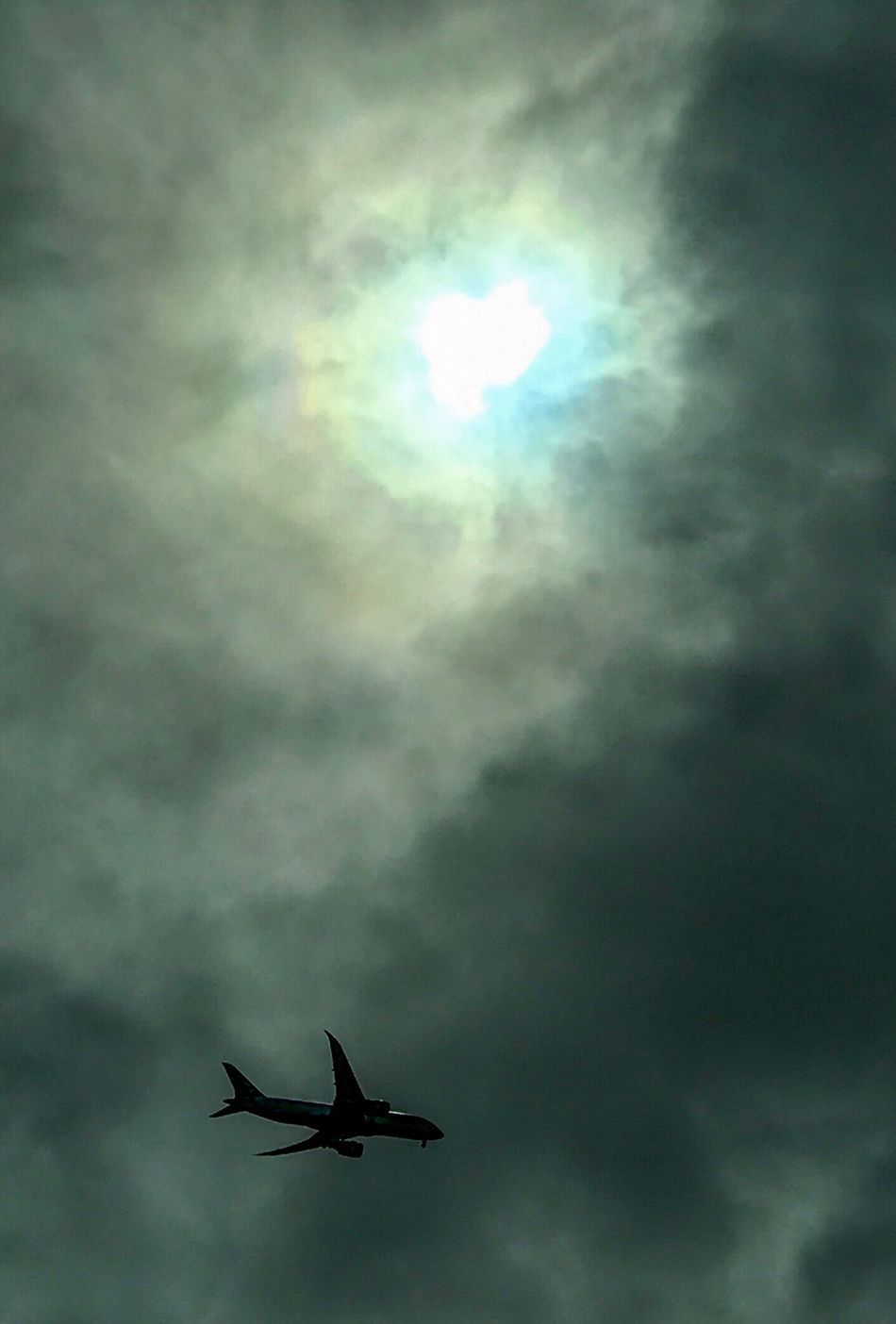Sky Cloud - Sky Flying Cloud Low Angle View Animal Themes Nature No People Outdoors Day Airplane