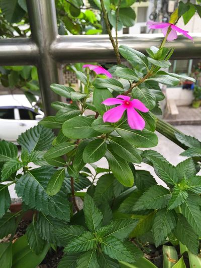 Just saw this prettylittle flower on our veranda Nofilter Nature