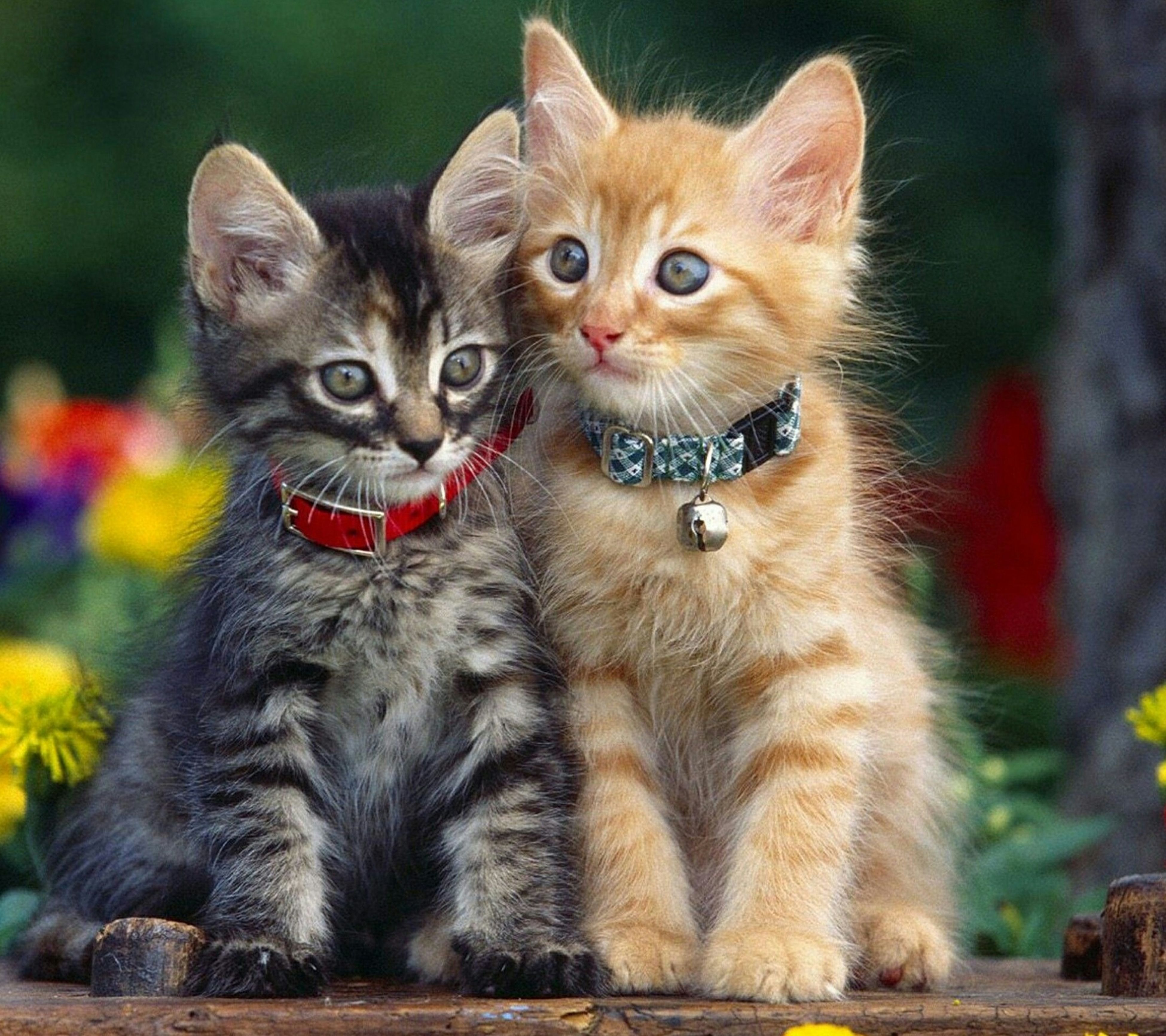 animal themes, mammal, one animal, domestic animals, pets, two animals, looking at camera, portrait, focus on foreground, domestic cat, sitting, togetherness, young animal, whisker, feline, three animals, animals in the wild, animal family, outdoors, cat