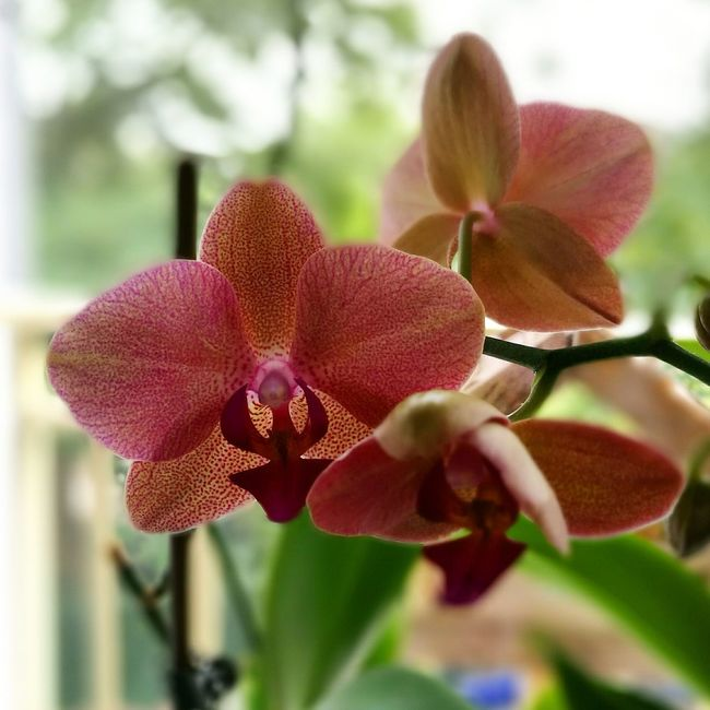 Orchid Flower Flowers Plant Structure Moms House