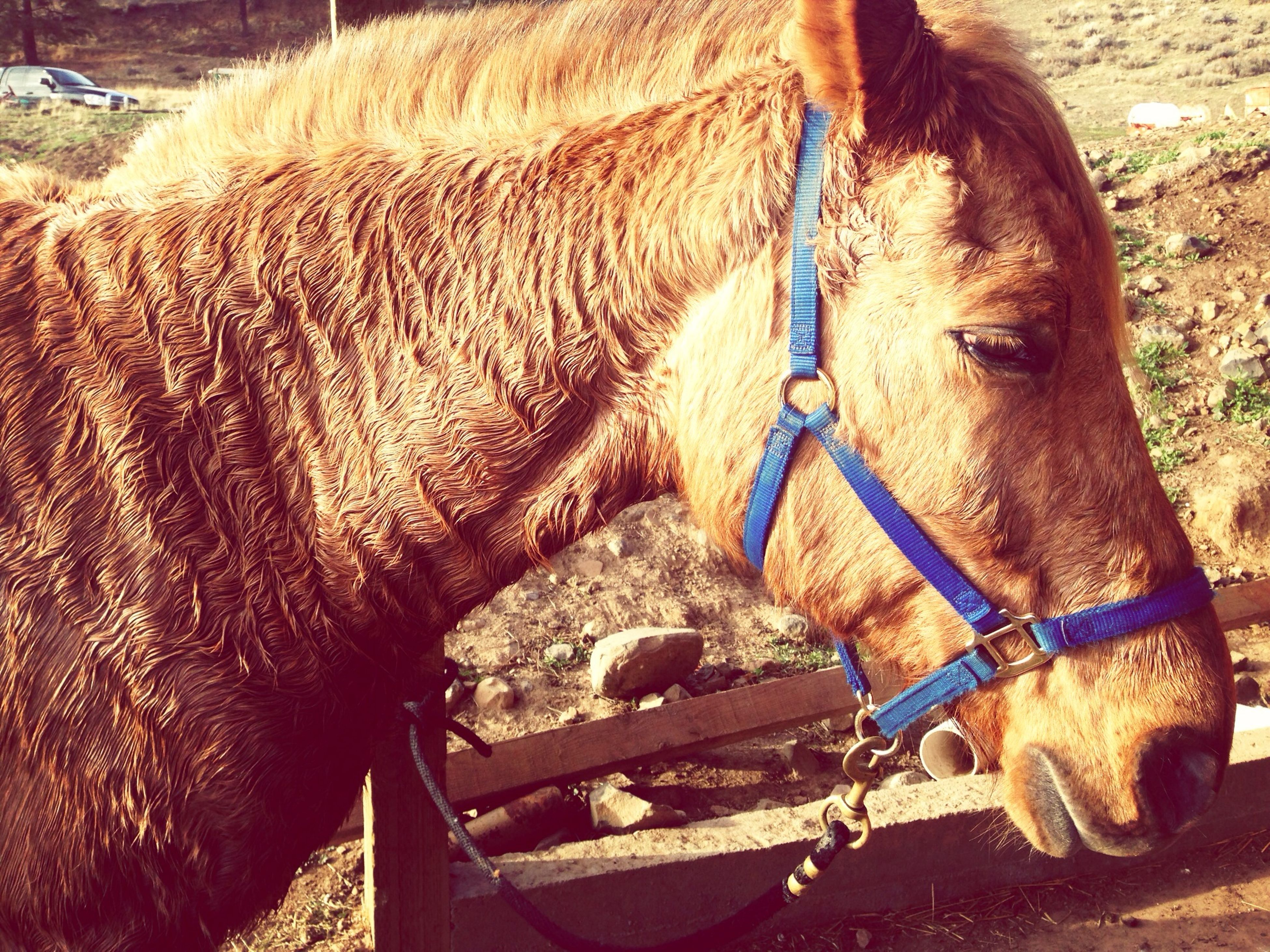 domestic animals, mammal, animal themes, horse, one animal, livestock, working animal, bridle, part of, close-up, animal head, field, one person, herbivorous, brown, day, outdoors, standing, animal body part, transportation