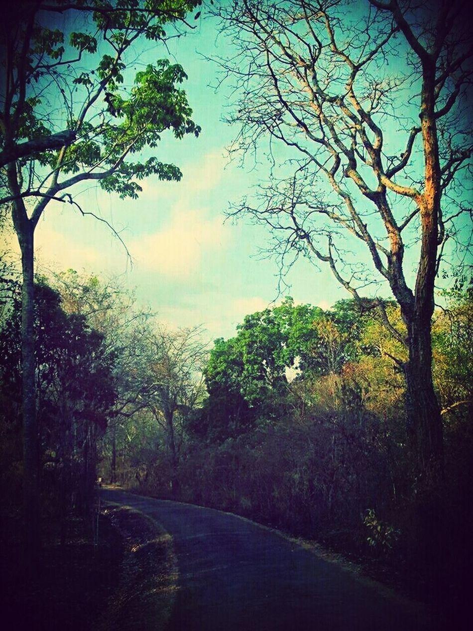 Feels Of Nature