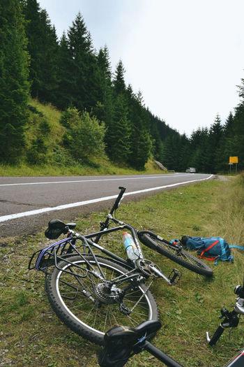 Bicycle Bicycleride Bike Bikeride Bikes Biketouring Biketrip Forest Highway Landscape Mountain Nature Outdoors Road Roadtrip Romania Touring Transfagarasanhighway Transfagaraşan Travel Twowheels