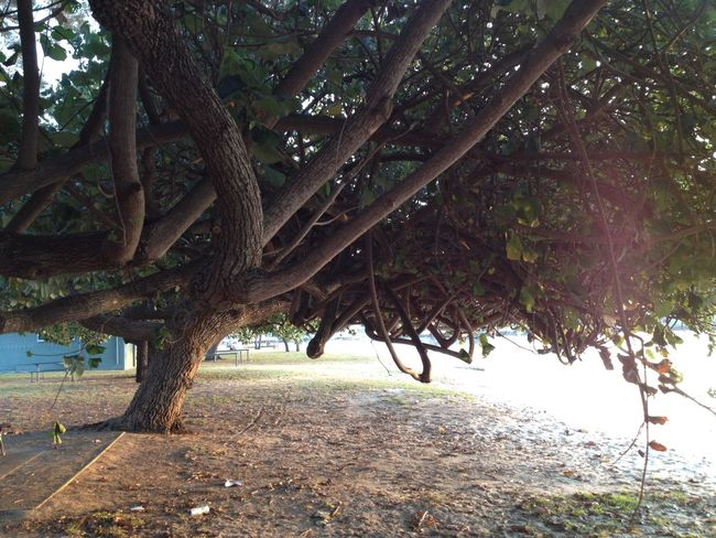 Beach Beauty In Nature Branch Day Growth Horizontal Leaf Nature No People Outdoors Tree