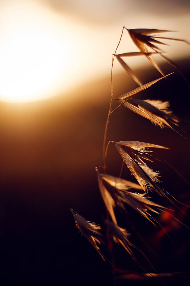 Atmospheric Mood Blade Of Grass Close-up Environmental Conservation Focus On Foreground Glowing Grass Growing Growth Leaf Light Nature No People Outdoors Plant Selective Focus Shiny Stem Twig Macro Beauty