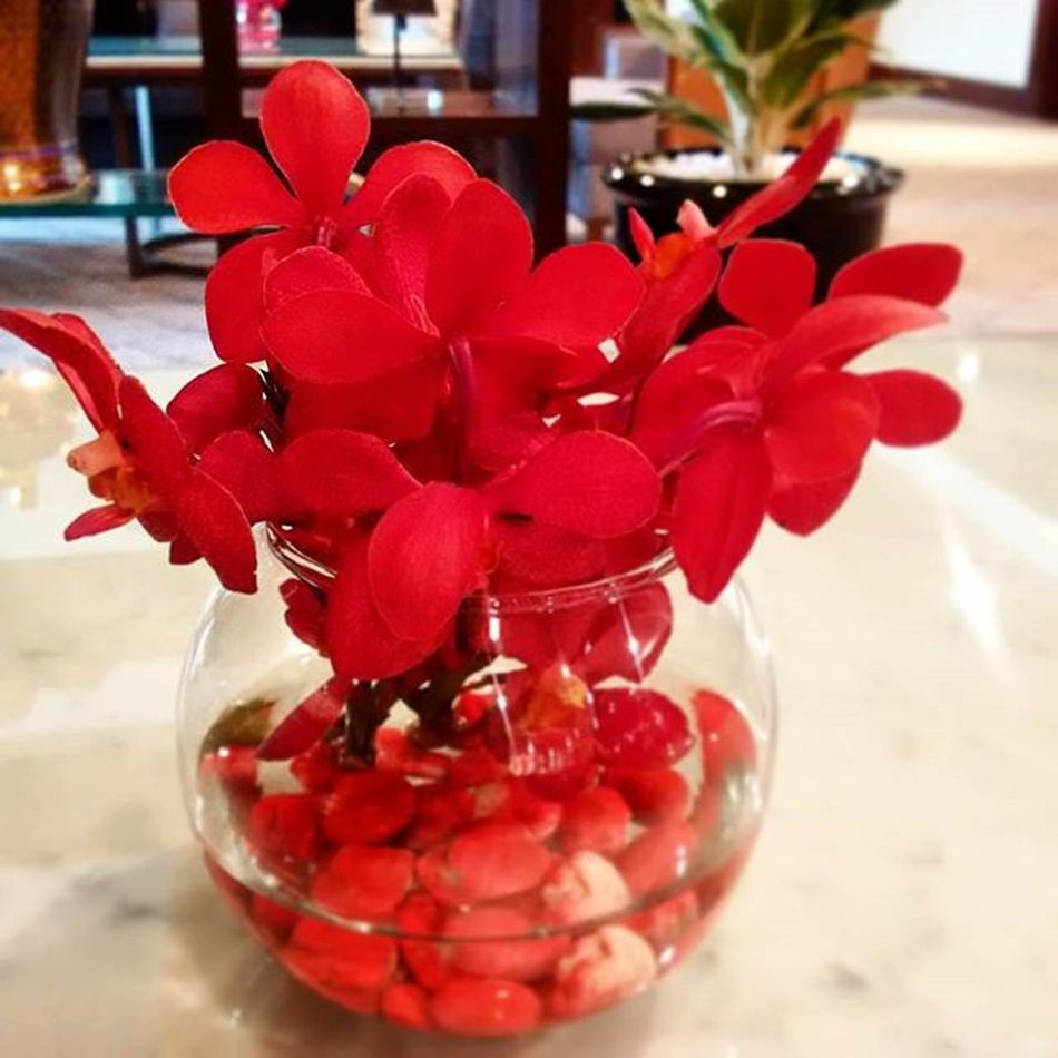 Sometimes, It was already predeterminded. Justaccepted Lifestyle Passed Red Flowers Beautiful Bangkok Thailand
