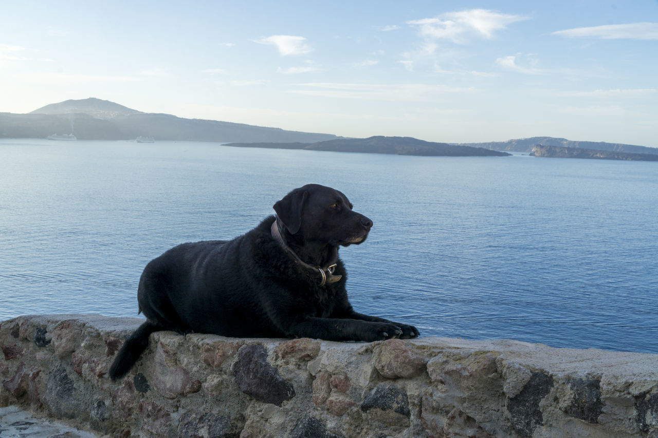 Beautiful stock photos of tiere,  Black Color,  Blue,  Canine,  Day