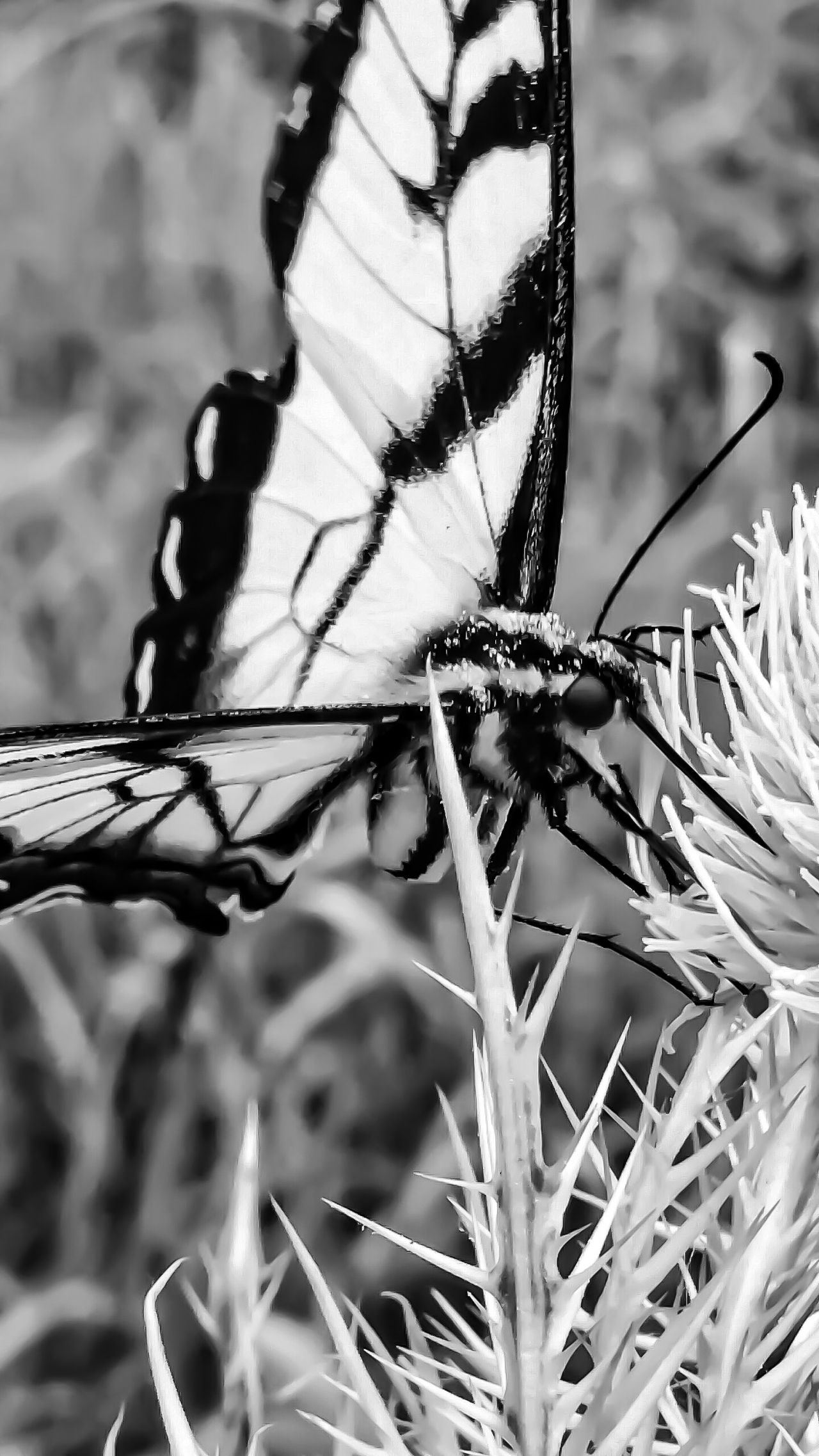 Animal Themes Close-up Animals In The Wild One Animal Focus On Foreground Insect Animal Wildlife Nature Outdoors No People Day Plant Beauty In Nature Perching Pollination Nectar Macro Still Life Tounge Out  Animals In Action Macro Photography Butterfly Butterfly - Insect Action Motion