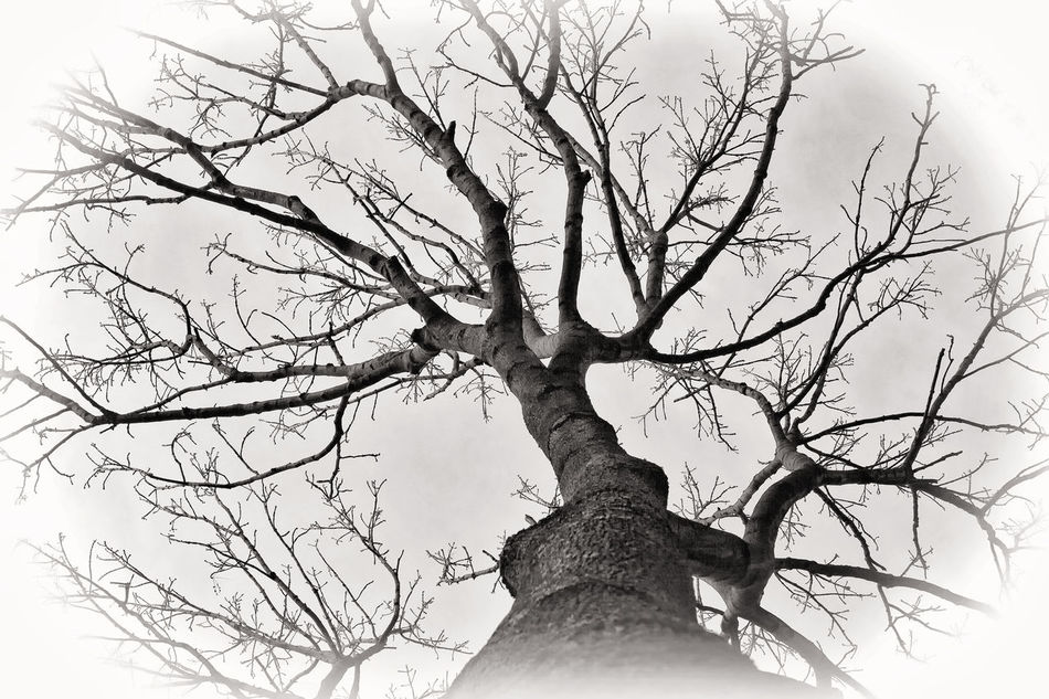 Bare Tree in wintertime Autumn Bare Tree Bare-branched Beauty In Nature Black & White Black And White Black And White Collection  Black And White Photography Blackandwhite Branch Bw BW Collection Bw_collection Flora Leafless Limb Low Angle View Monochrome Nature No People Outdoors Tree Trees And Sky Winter Wintertime