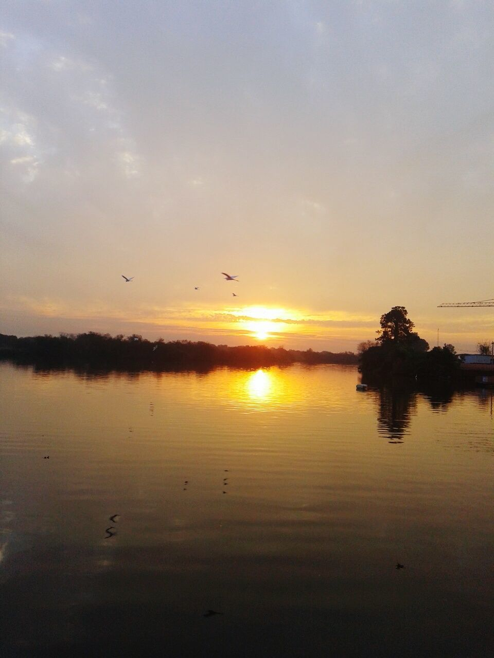 sunset, bird, animals in the wild, animal themes, reflection, flying, water, nature, beauty in nature, silhouette, scenics, tranquil scene, large group of animals, animal wildlife, sky, wildlife, flock of birds, tranquility, lake, no people, outdoors, sun, mid-air, spread wings, tree, day