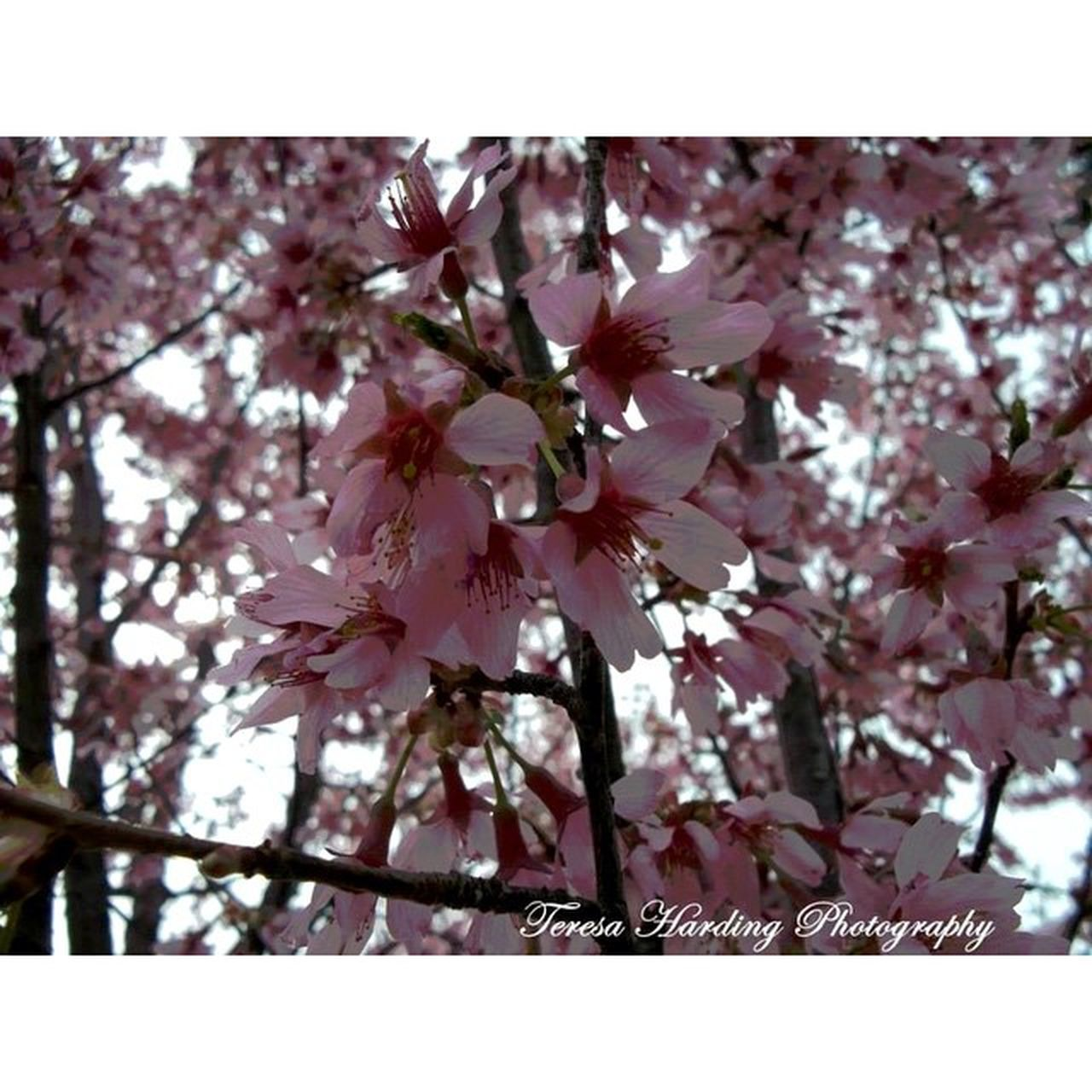 Canvasfilter Instasize Nature Flowers TeresaHardingPhotography