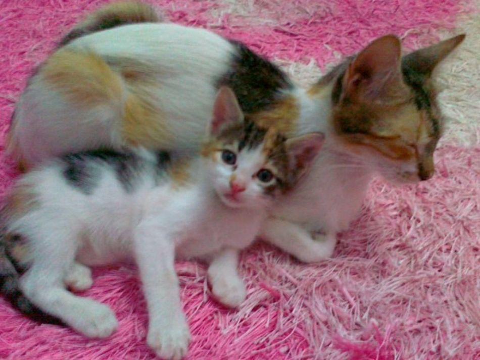 Ooba with her child ^^ أوبا العبيطة :D Beautiful Animals  at Home in Azzawya #Libya