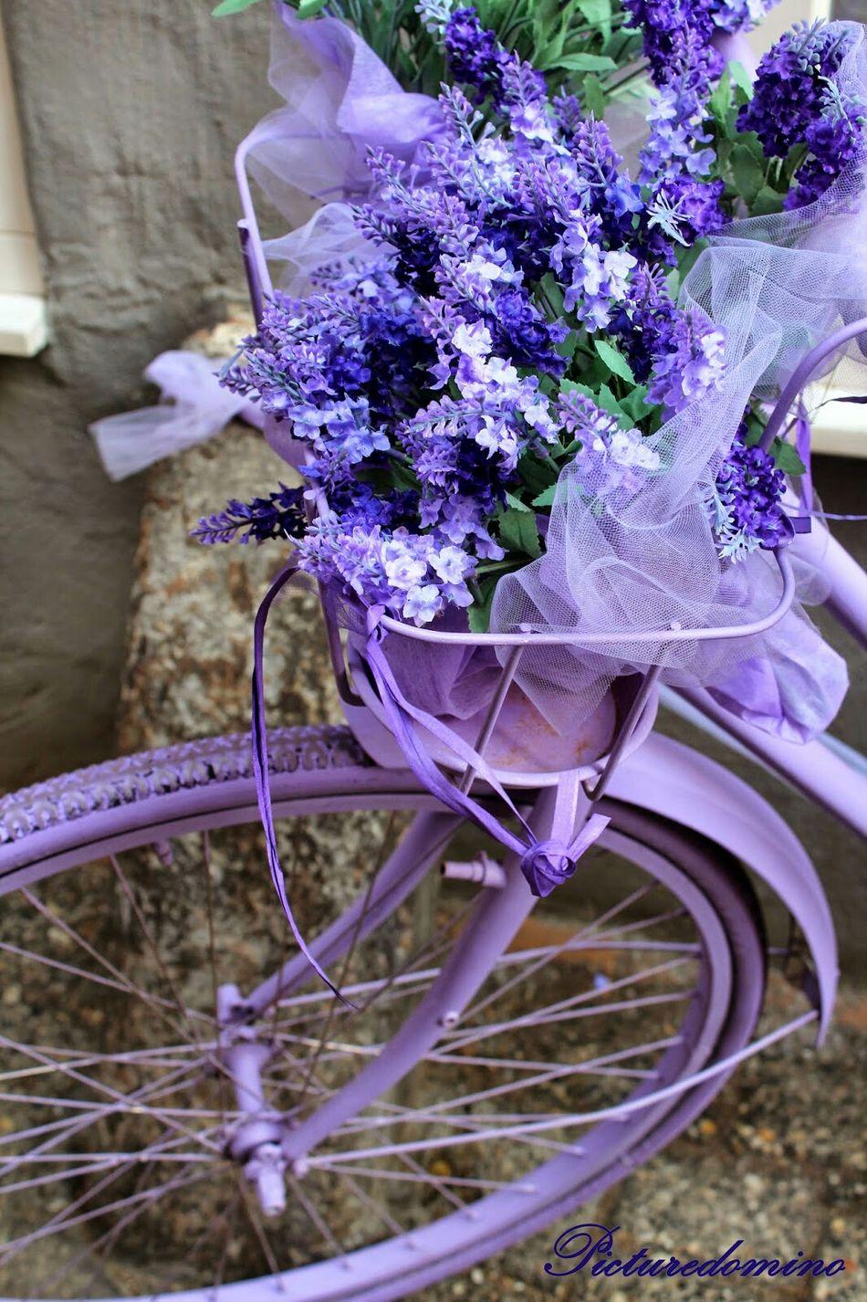 Bike Violet Flowers Spring Good Feeling