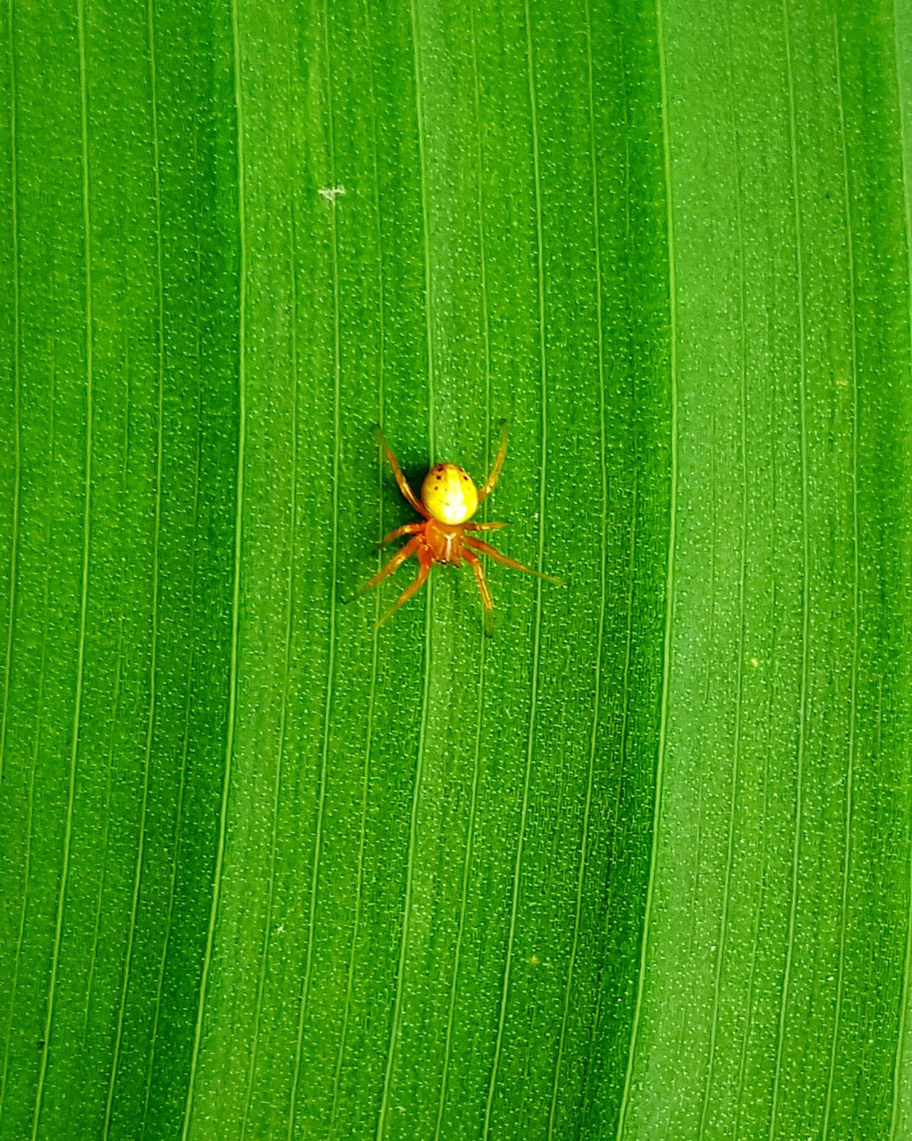 Spider Spiderworld Spider Nature_collection Eyenaturelover Arachnid Photography Arachnophobia Arachnid Arachnipocalypse Nature Is Art Fresh On Eyeem  Details Of Nature From My Point Of View Nature On Your Doorstep Nature_collection Naturephotography Showcase June 43 Golden Moments Colour Of Life Birds Eye Veiw Color Palette