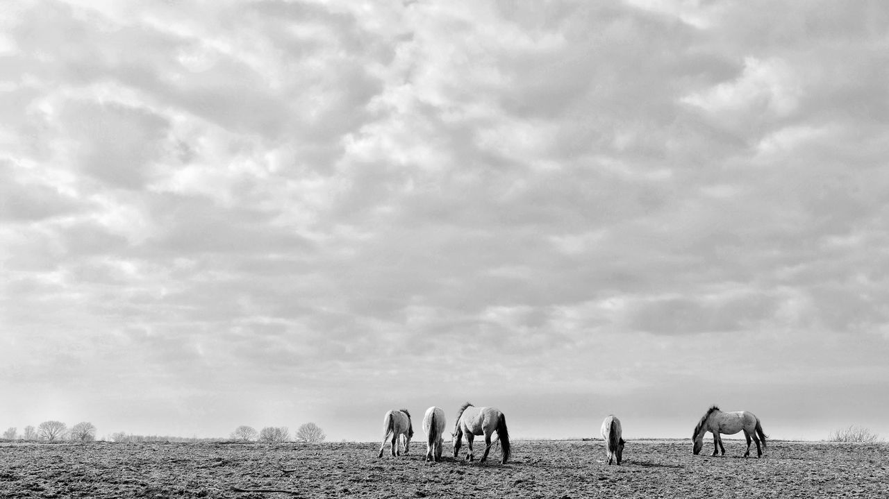 Beautiful stock photos of pony, Animal Themes, Animals In The Wild, Beauty In Nature, Cloud - Sky