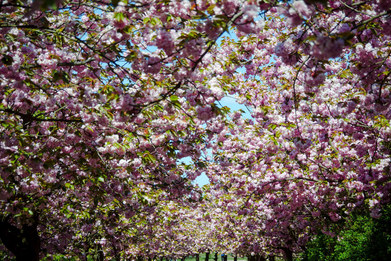 Stillness In Time Cherry Tree Yeah Springtime! Springtime Nature Still Life Garden Eden Secret Garden Flower Power Nature On Your Doorstep Light And Shadow Schattenspiel  Fine Art Think Pink Only Flowers Abstract Nordic Light Outdoor The Great Outdoors - 2016 EyeEm Awards My Eyes My Nature Colors Of Time Pink Flowers