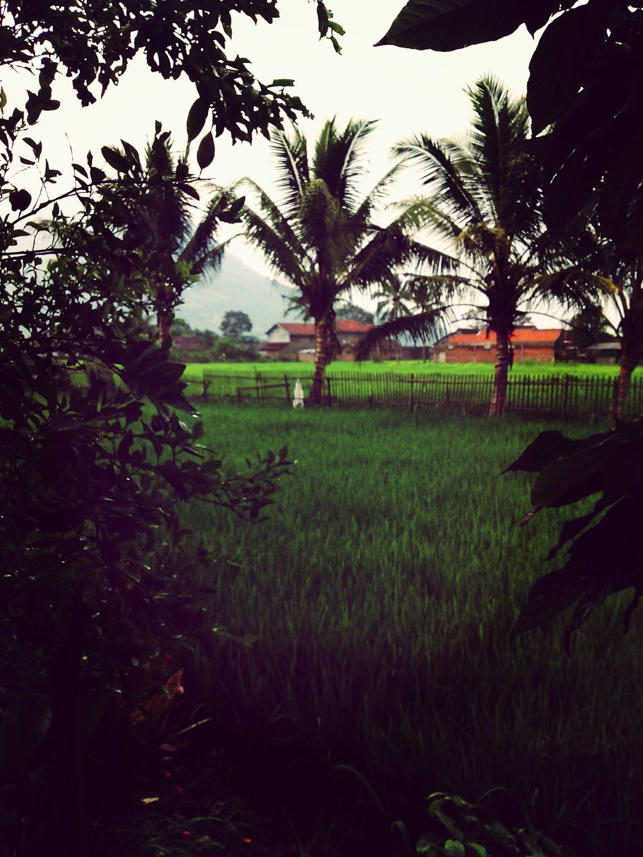 Garut Island