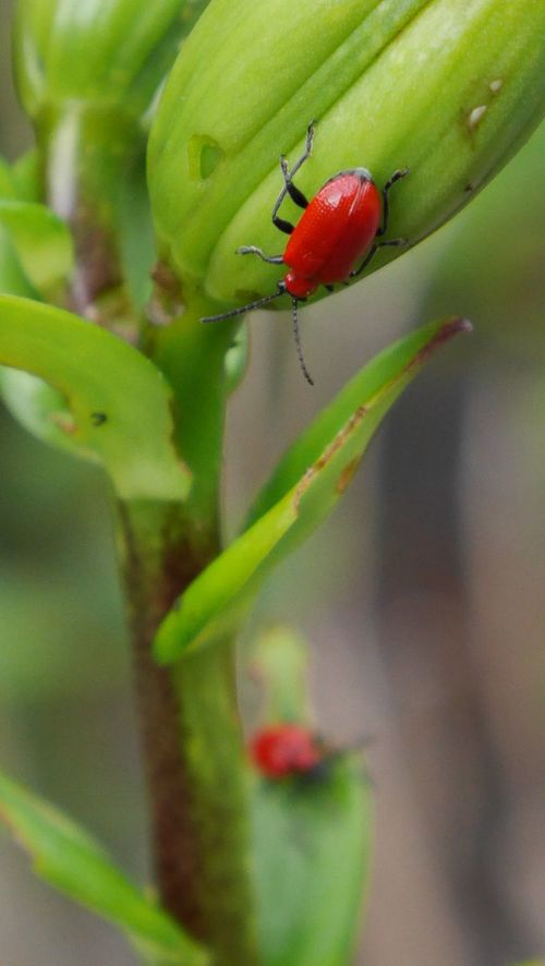 Insects  Plants Green Eating Garden Nature On Your Doorstep