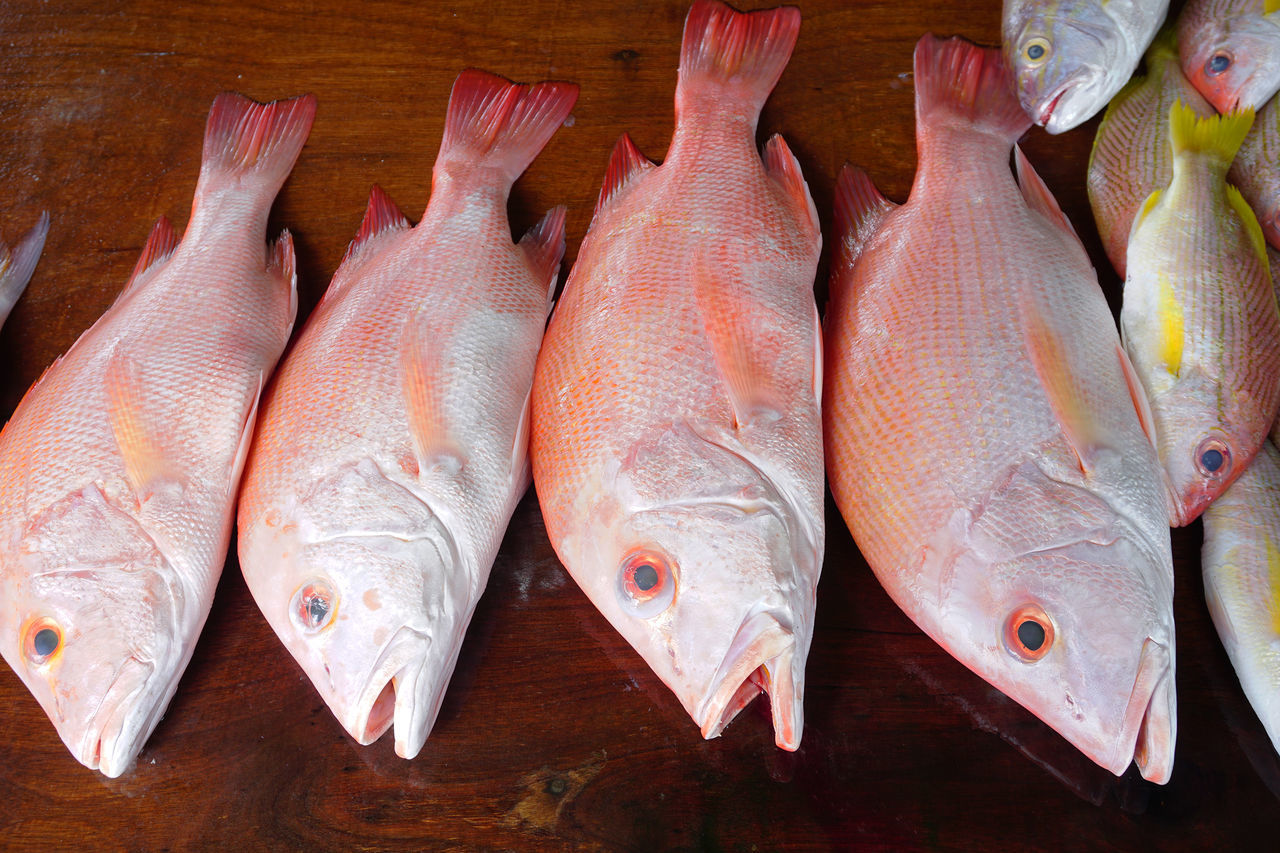 Snapper Fish #closeupshot #market #snapper Close-up Day Fish Food Food And Drink Freshness Healthy Eating High Angle View Indoors  No People Raw Food Red Grouper And Snappe Seafood