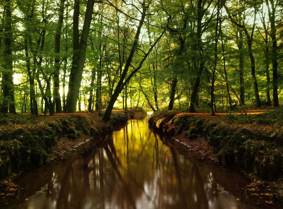 Beautiful stock photos of river, Beauty In Nature, Day, Diminishing Perspective, Field