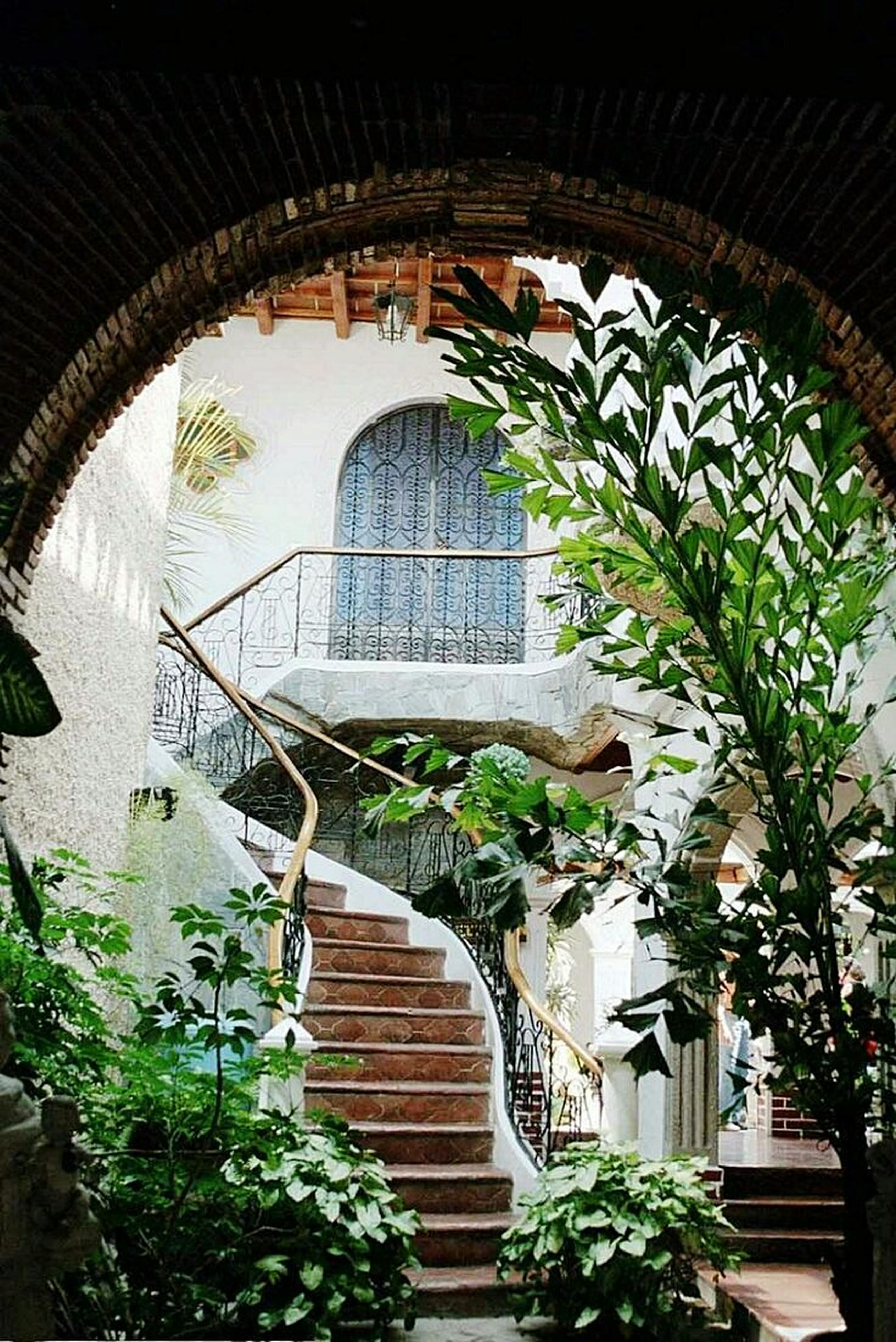architecture, built structure, plant, building exterior, arch, steps, potted plant, house, steps and staircases, staircase, growth, railing, ivy, window, residential structure, tree, building, entrance, day, leaf