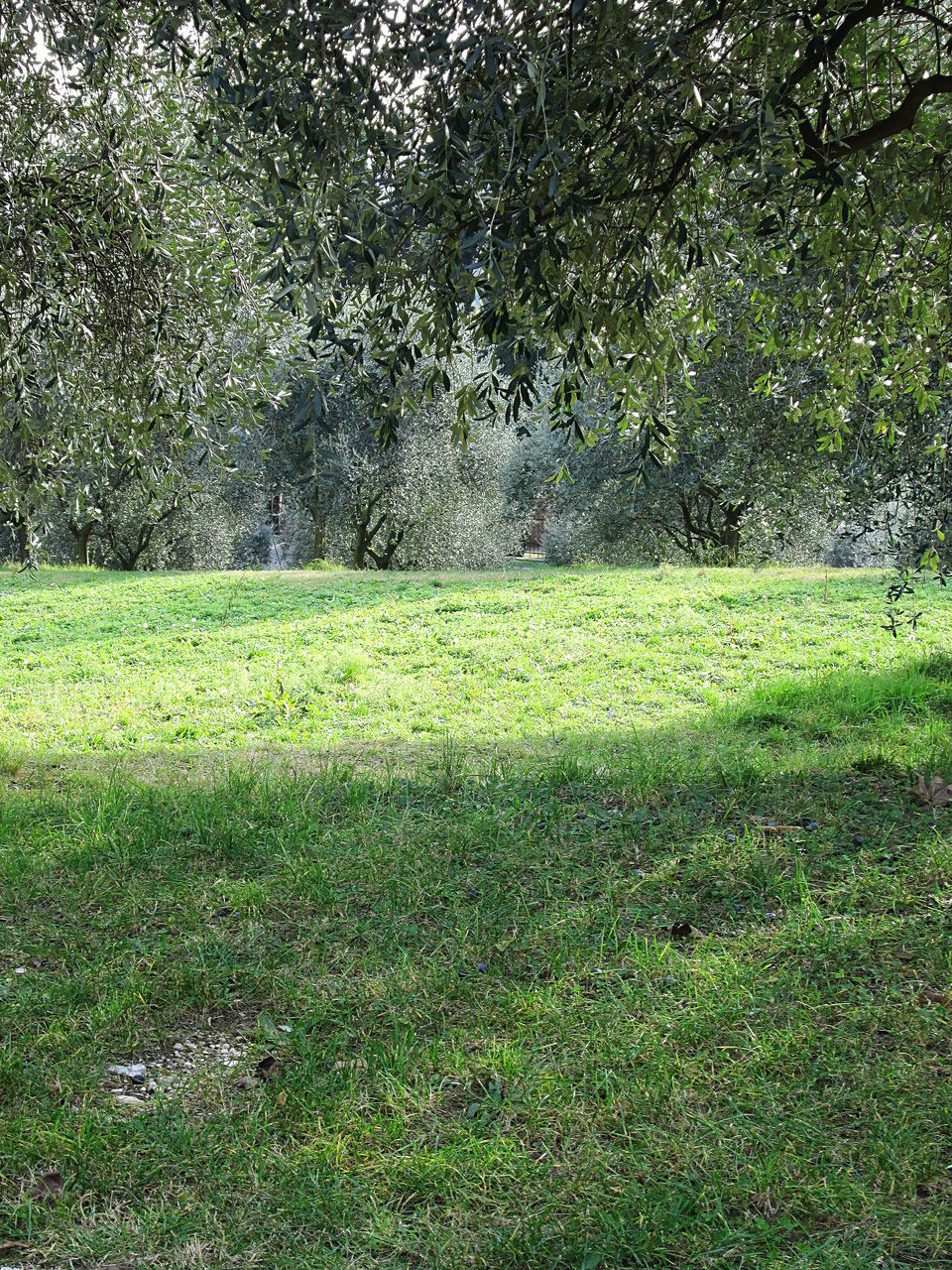 grass, green color, growth, tree, nature, field, no people, day, outdoors, plant, tranquility, beauty in nature, landscape, freshness