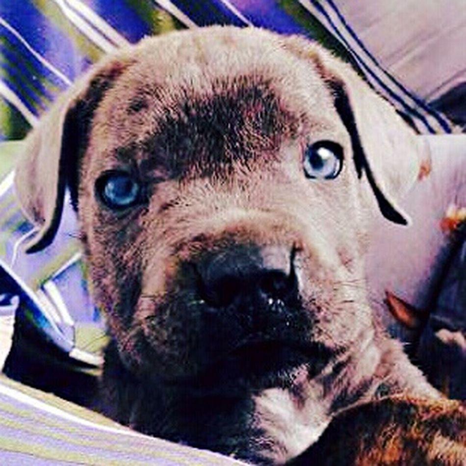 Ora 😊 Blue Eyes First Eyeem Photo