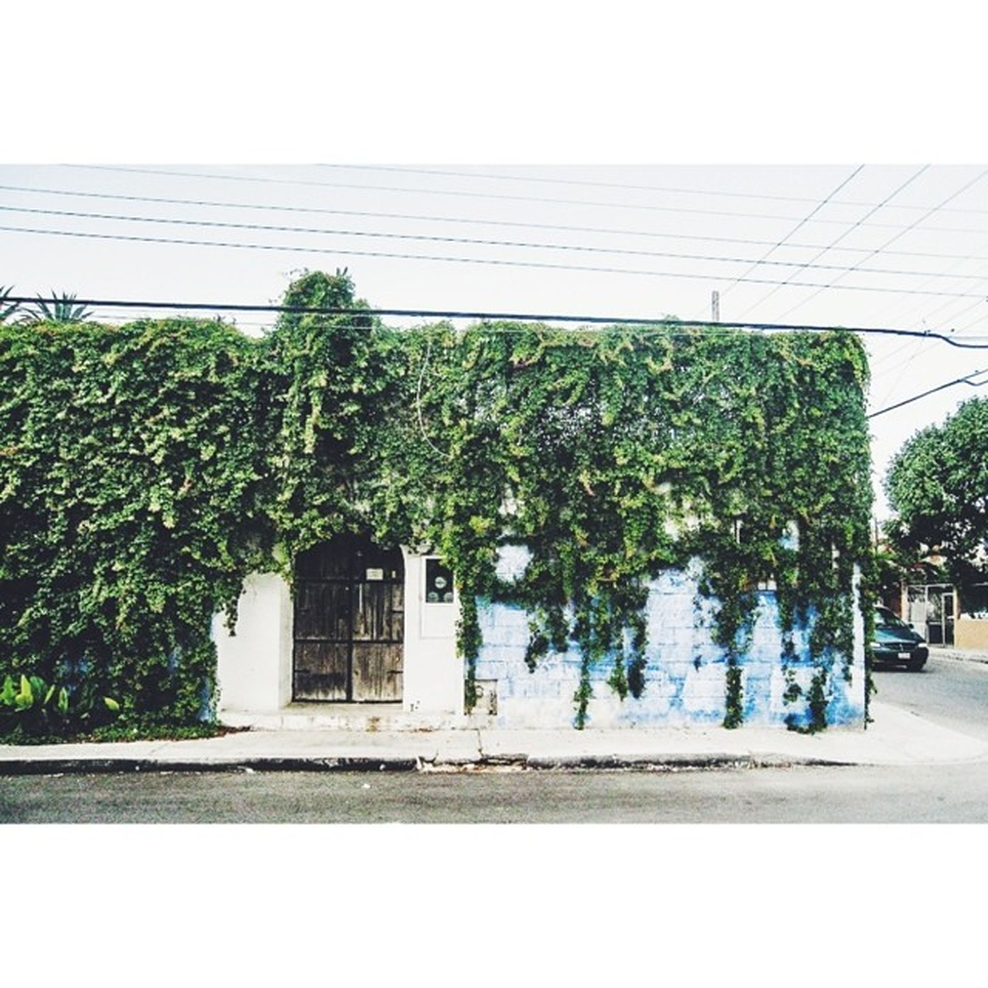 building exterior, built structure, tree, architecture, plant, growth, clear sky, potted plant, house, day, sunlight, street, green color, outdoors, no people, city, nature, sidewalk, sky, road