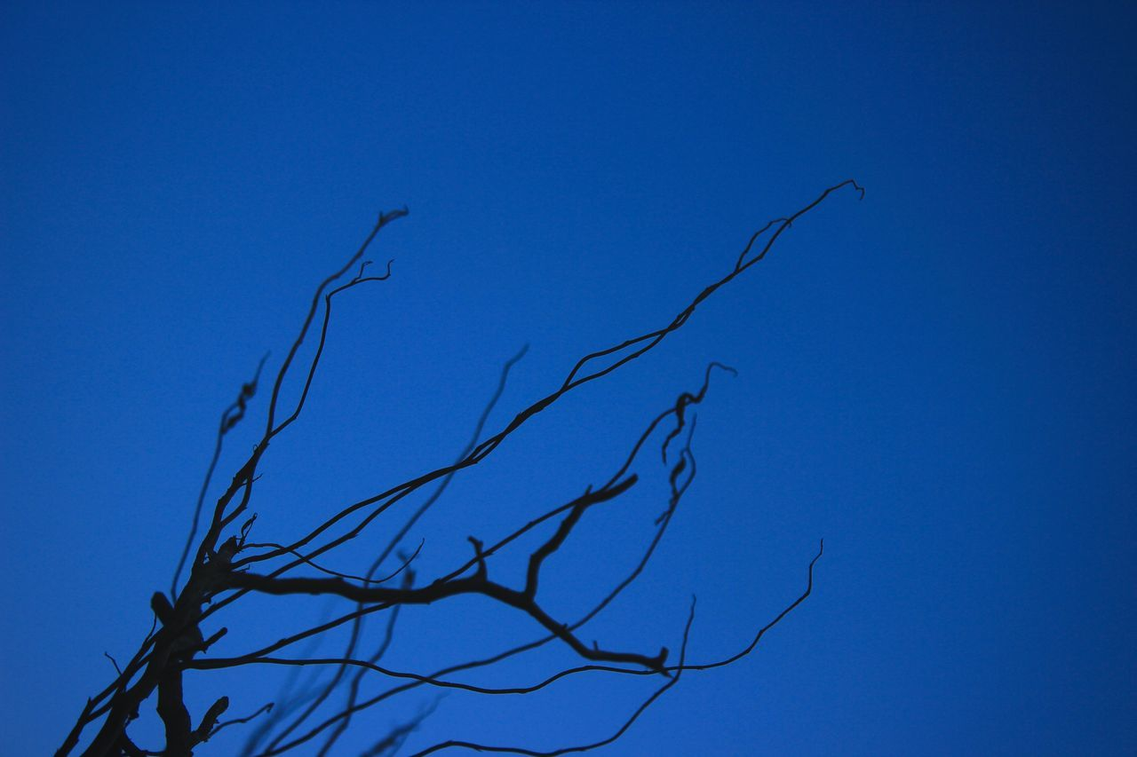 Bare Tree Beauty In Nature Blue Blue Sky Branch Branches Branches And Sky Clear Sky Copy Space Day Dried Plant Low Angle View Nature No People Outdoors Sky Tranquility Tree Winter
