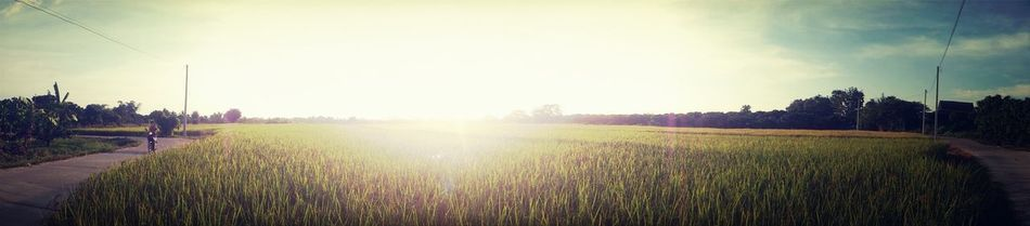 Field. Landscape Panorama Countryside Taking Photos