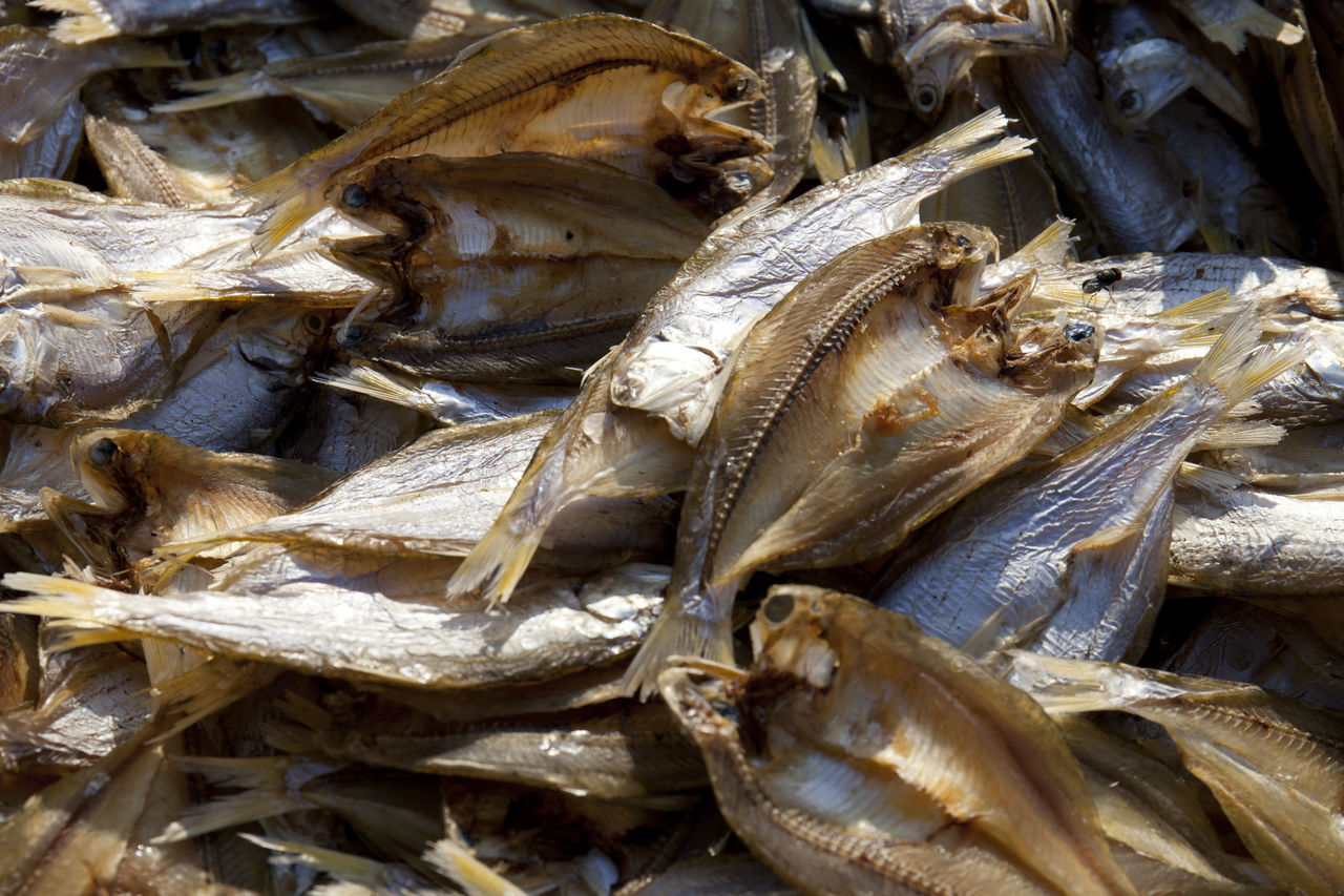 Salted Fish for Sale Backgrounds Close-up Dried Fish  Fish Market Food Food And Drink For Sale Freshness Full Frame Healthy Food High Angle View INDONESIA Indonesia Cuisine Nature No People Salted Fish Seafood