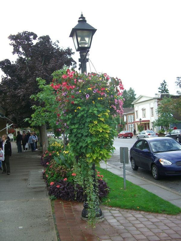 Hanging Basket of Flowers Beautiful Can Cloudy Sky Colourful Composition Full Frame Grass Hanging Basket Incidental People Lamppost Multi Coloured Flowers Niagara Falls Niagara On The Lake Outdoor Photography Street Tourism Tourist Attraction  Tourist Destination. Town Trailing Plant Tree
